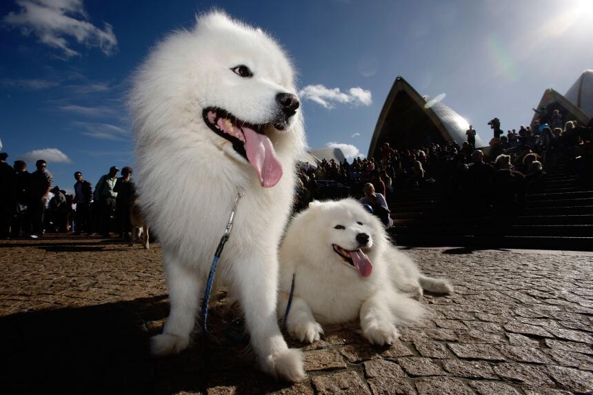 ¿Cuáles son los perros más saludables?