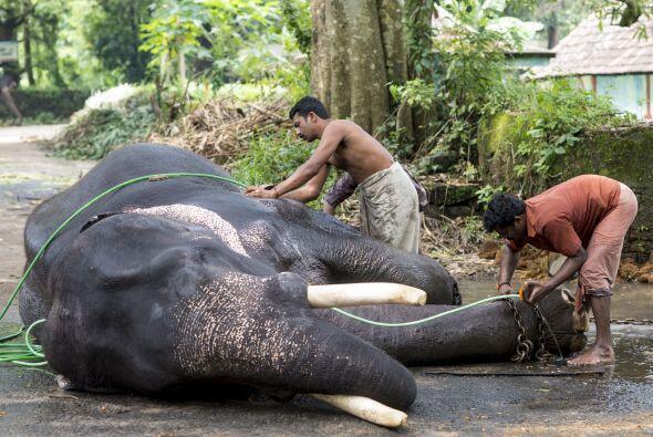 El tratamiento también incluye el masajeo de su cuerpo con una piedra es...