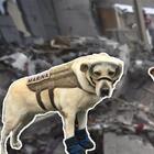Los héroes del terremoto en México también ladran