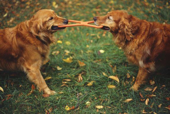 3. Permíte que tu mascota sociabilize con otros perros, as&iacute...