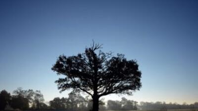 Silueta de un árbol.