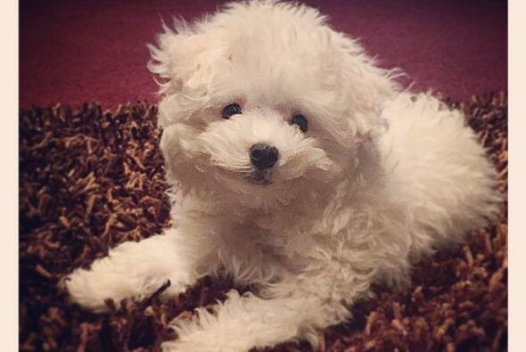 Su perrito, Buddy, es uno de los grandes amores de su vida