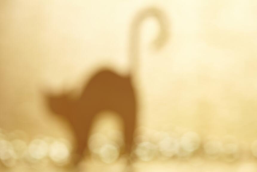 Conoce el misticismo del gato negro  7.jpg