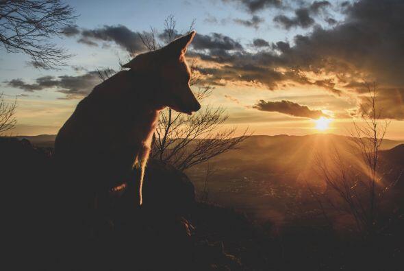 El Mes del Perro en el horóscopo chino se extiende desde el 23/24 de sep...