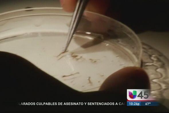 El 2012 fue un año récord por muertes del virus del Nilo, autoridades di...