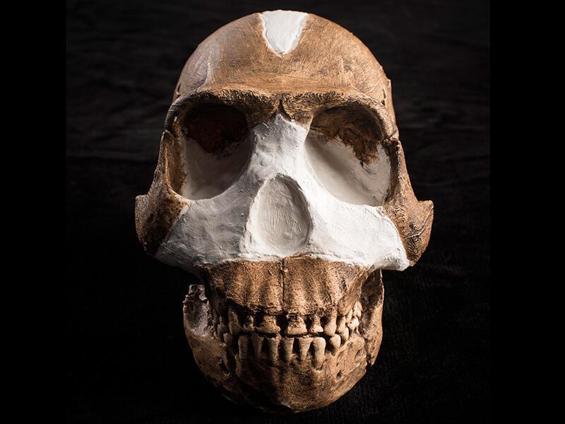El Homo naledi, de unos 1,5 metros. fue encontrado en un yacimiento en S...