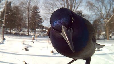 Cuando la curiosidad de las aves queda retratada en 'selfies'