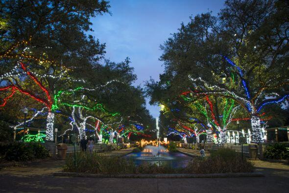 La exhibición Houston Zoo Lights ha roto récords de visitantes ¡mira las...