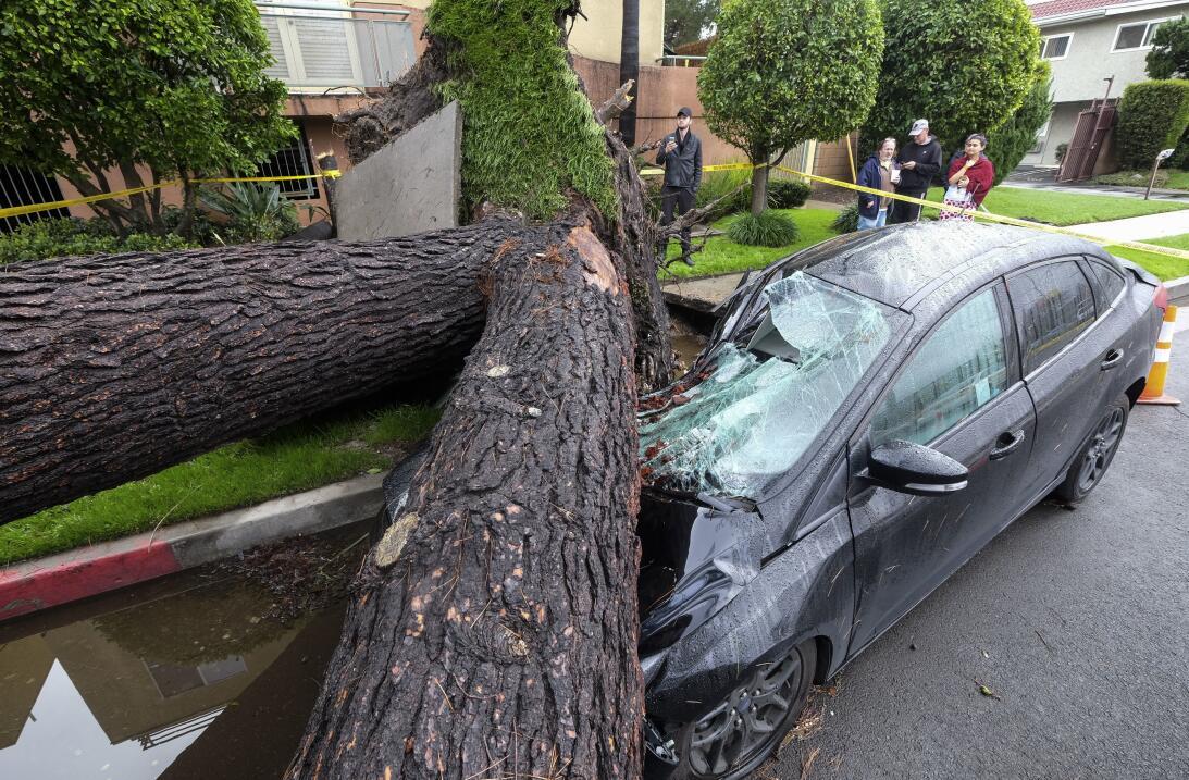 Un árbol colapsó sobre un vehículo en el vecindario angelino Sherman Oak...