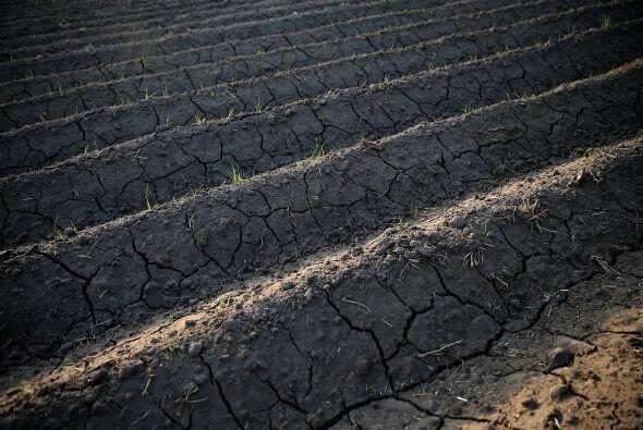 Tras cuatro años de sequía, la tierra muestra este aspecto cuarteado en...
