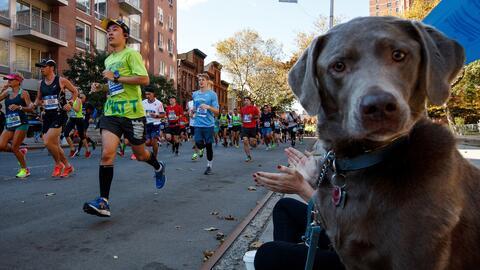 Un perro disfrutando de la maratón de Nueva York, en noviembre de...