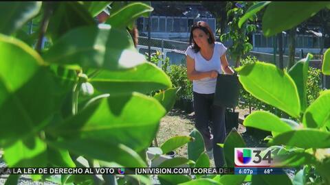 En Los Angeles se pueden obtener gratis árboles para sembrar