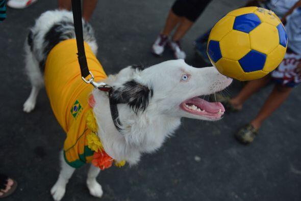 Por supuesto que, como sus dueños, estos perros también se divierten a l...