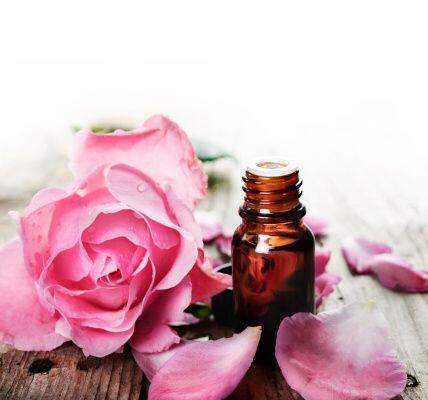 El aceite de rosa mosqueta ayuda a reparar el pelo seco y quebradizo al...
