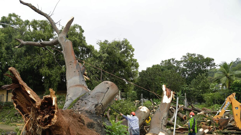 Trabajadores cortan las ramas de un árbol que cayó y mató a un niño en l...