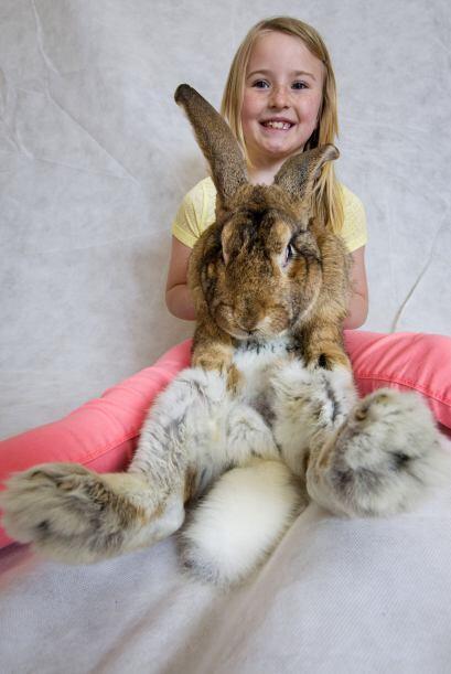 Lo importante para los conejos no es quién tenga el título, sino que el...