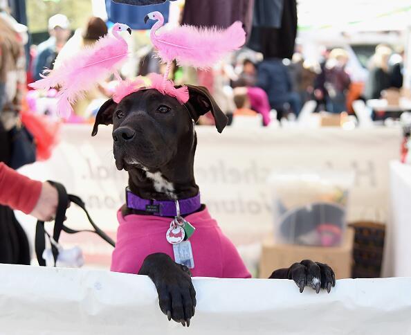 ASPCA celebra con los mejores amigos en NYC