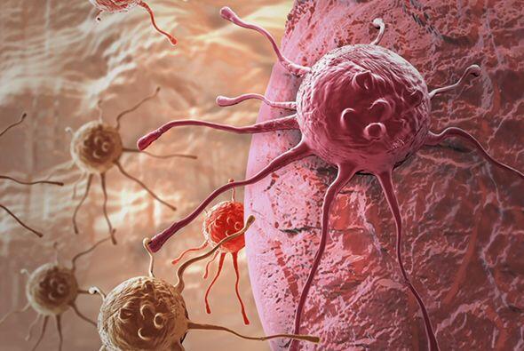 La mayoría de las células del sistema inmunológico se encuentran en la m...