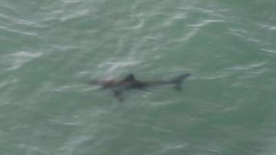 Tiburones en Huntington Beach. (Imagen tomada de la cuenta de Twitter de...