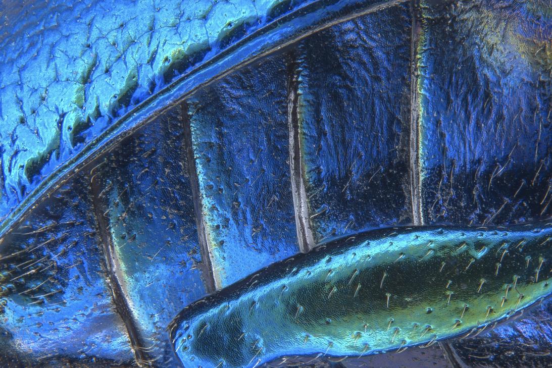 20 imágenes impresionantes del microcosmos 18 Scanlon_1.tif