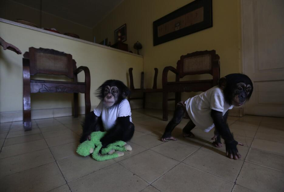 Monkey business in Havana 32.jpg