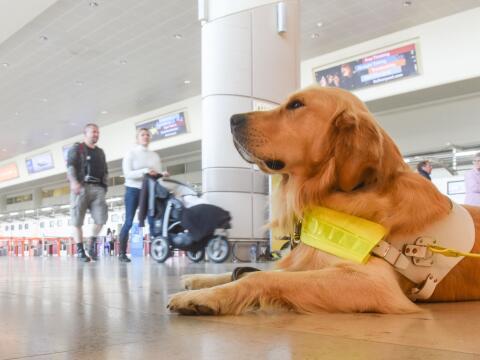 Perros guías inician ejercicios en aviones