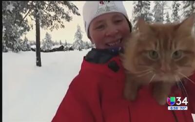 Jasper, un felino que no le teme a la nieve
