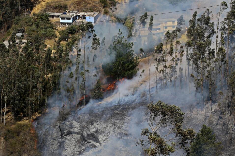 Aunque la pérdida de bosque se ha reducido en las últimas décadas en Amé...