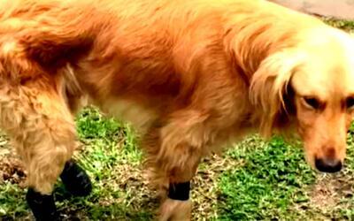 Al menos 700 perros abandonados viven en el refugio Territorio de Zaguat...