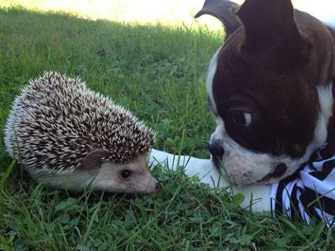 Una de las tantas habilidades de Biddy es hacer amigos, por eso en sus r...