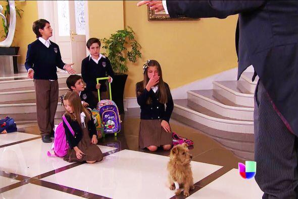 Ana, ¡la tropa Lascurain ya descubrió al perrito que rescataste en la ca...