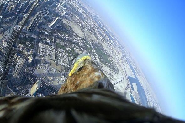 ¡Esta ave en particular ha volado desde la parte superior de la Catedral...