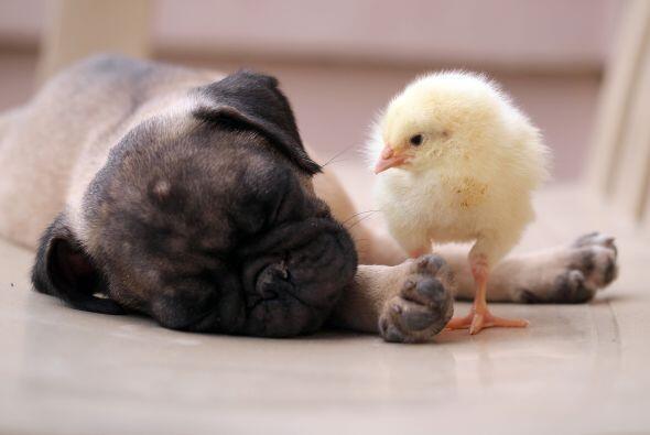 La rara relación comenzó cuando sus dueños presentaron a los animales en...