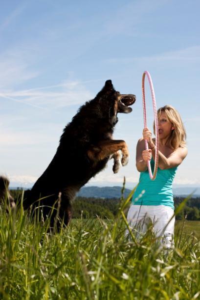 Incluso puedes comprar un aro de hula hoop para practicar con tu perro a...