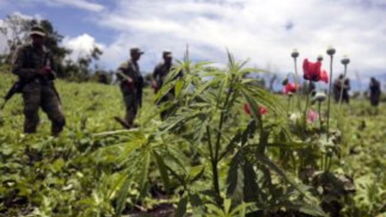 En la actualidad, México sólo permite la posesión de 5 gramos de cannabi...