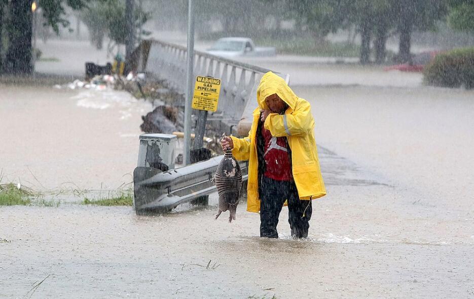Un hombre recata un armadillo de las fuertes lluvias en Houston.