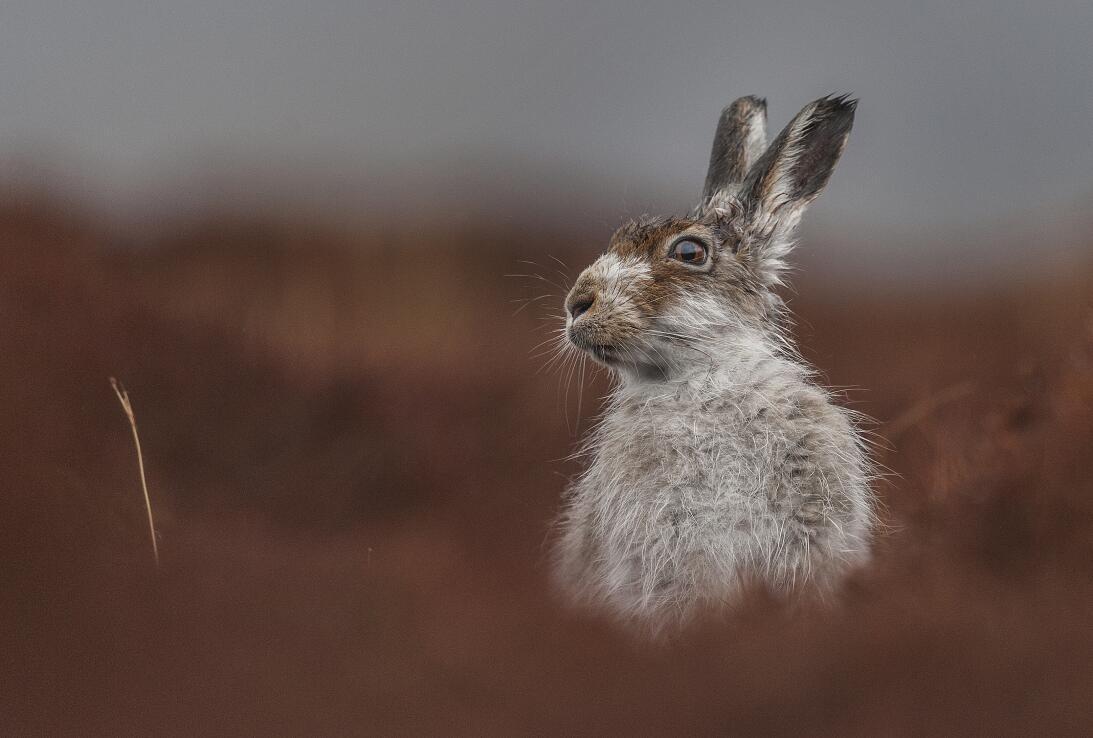 'Contemplación', fotografía ganadora de la categoría Retrato de animales...