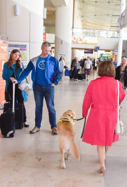 Perros guías que ayudan en el aeropuerto