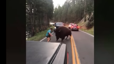 Pasará 130 días en la cárcel por hostigar a un bisonte en el parque nacional Yellowstone