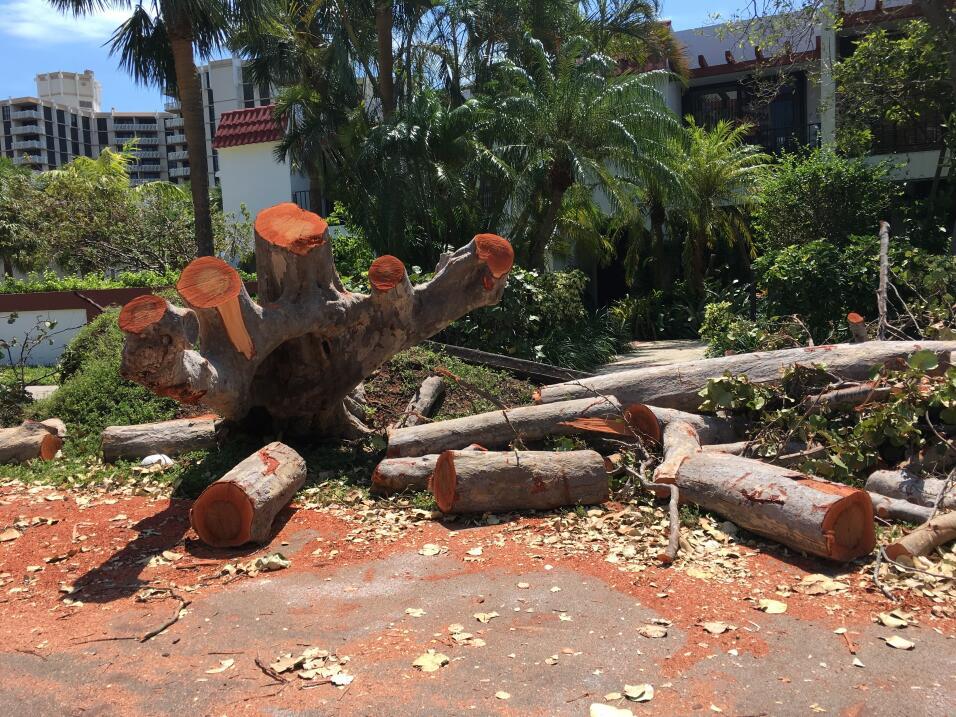 """""""Vuelvan a los Cayos"""": la petición del gobernador de Florida a los resid..."""