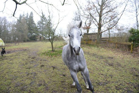 Pero el equino también gusta de salir a cabalgar al campo, claro, si no...
