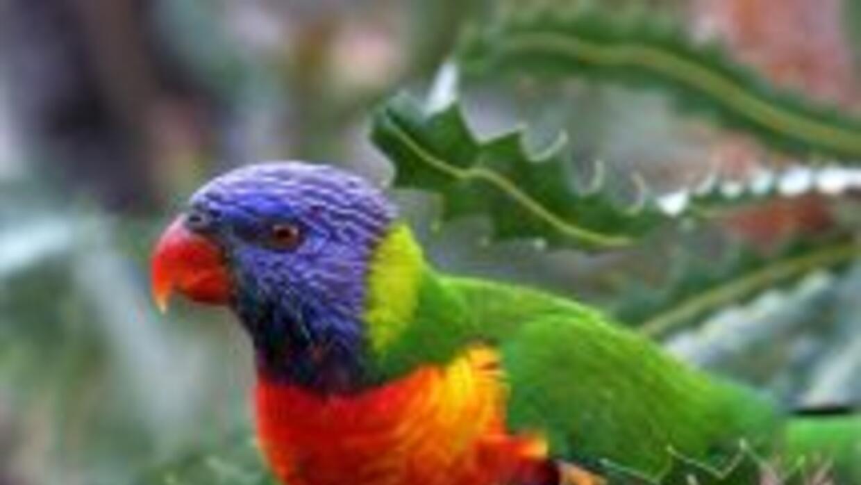 Es raro que estas aves cambien sus hábitos alimenticios