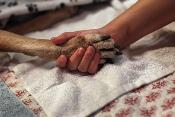 Por último, debes acostumbrar a tu perro al corte de sus u&ntilde...
