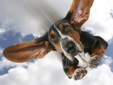 Con drones o paracaídas, los perros caerían del cielo. &iq...