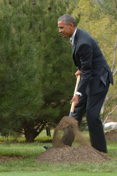 La reforestación de la zona, no sólo deja una huella política, también e...