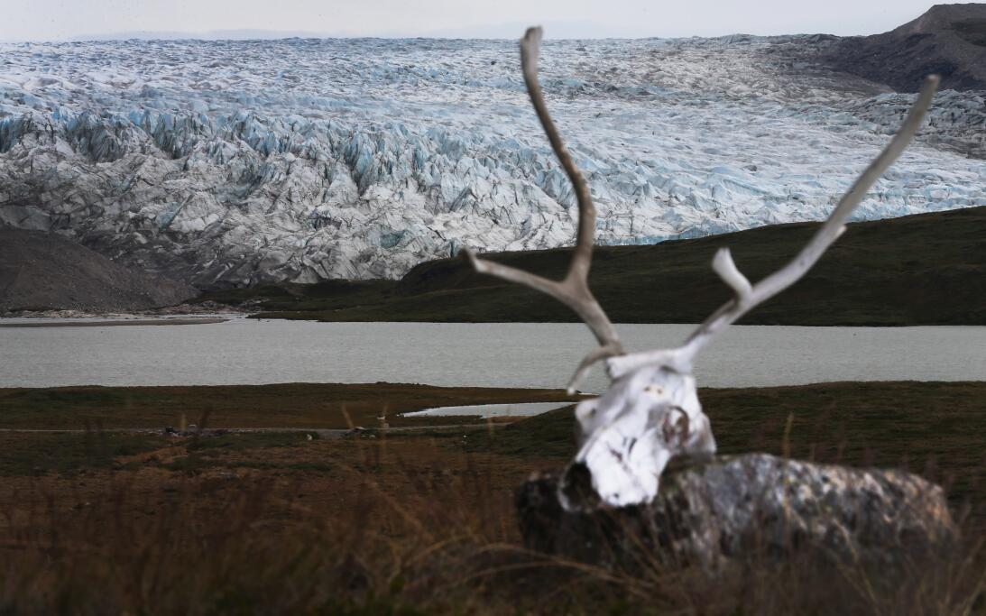 Qué dice la ciencia sobre la nariz roja del reno Rodolfo GettyImages-174...