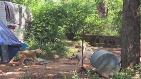 Rescatan a 46 mascotas presuntas víctimas de maltrato animal en el conda...