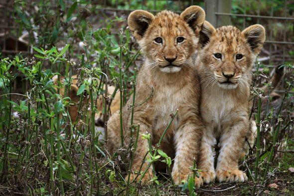 Lucen muy tranquilos, pero en realidad están en la edad de la curiosidad.