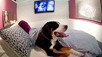 ¿Cómo seleccionar un hotel para tu perro?