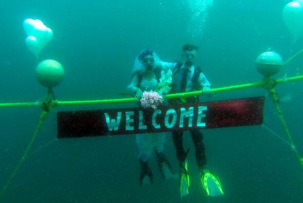 Entre algas, bancos de peces y mucha mucha agua, estos enamorados se die...